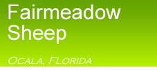 Click for Home Page for Fairmeadowsheepfarm.com Ocala, Fl  USA  (352)732-1184